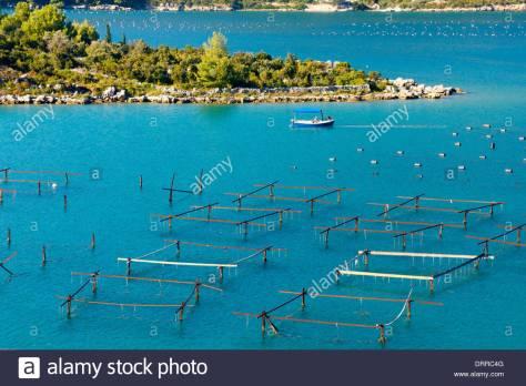 mussels-farming-oyster-farm-on-peninsula-peljesac-in-croatia-DRRC4G