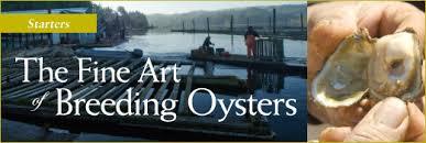 thefineartof oysterbreedingimages